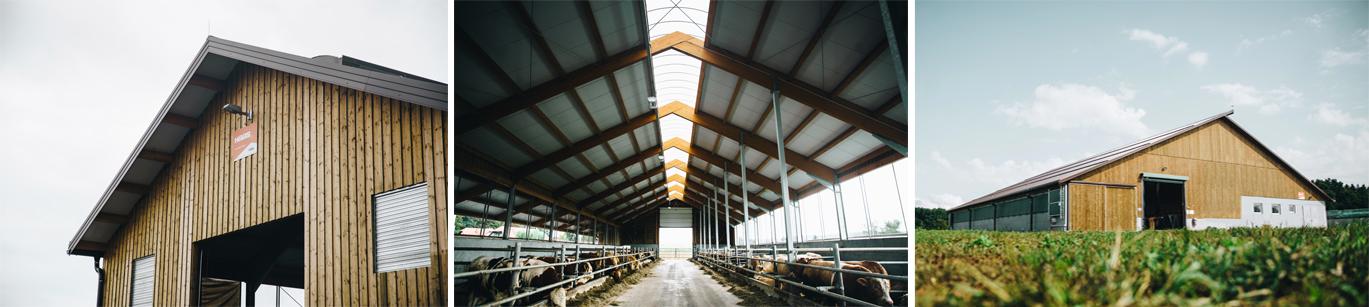 Gradnja hlevov za govedo iz lesenih nosilcev.